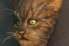 Display cat (2015_12_30 23_56_00 UTC)